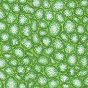 Rrrrmicroscope-plantcells2b_shop_thumb