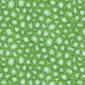 moss cells