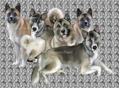 Akitas group