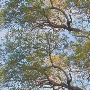 jacaranda_1025_crop