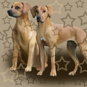 Rrrrrhodesian_ridgebacks_with_stars3_shop_thumb