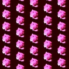 Hello Hammie Pink