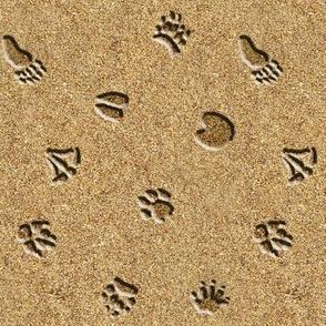 Animal Tracks in Sand
