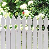 Rrr005_white_picket_rose-l_shop_thumb
