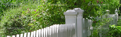 White Picket Fence Posts, S