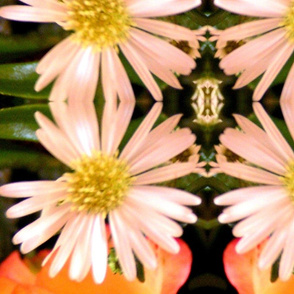 Photographic Daisy Print