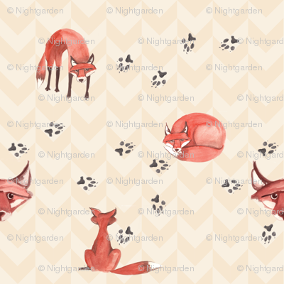 foxes_scatter