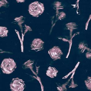 Roses - 1