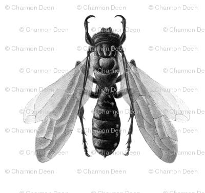 Tiphiidae