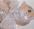 Rsquirrel1_comment_185692_thumb