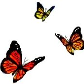 Rrrrbutterflies_and_clouds._from_fuze_publishing_ed_ed_ed_ed_ed_shop_thumb