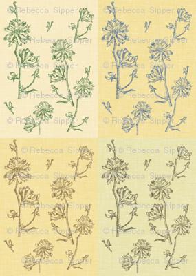 Chicory Field