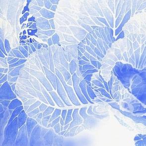 BAUER - Blue Cabbage