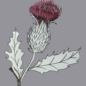 Rrrrrrrrthistle_shop_thumb
