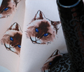 Rrrblue_eyed_cat2bcd_seal_face_signed_comment_165602_thumb