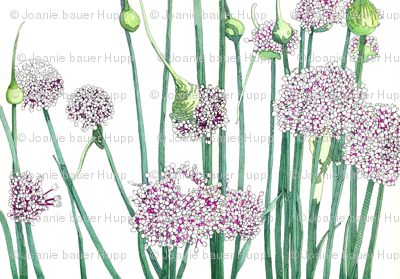 BAUER - Onion Blooms
