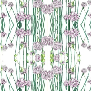 BAUER - Onion Blooms