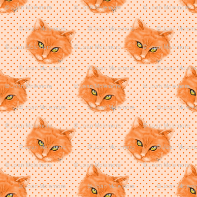 Orange Cat with polka dots background