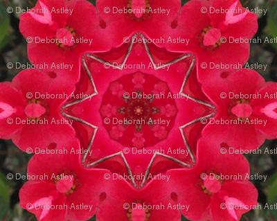 Crabapple blossom kaleidoscope