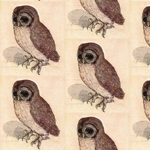 Dürer's Owl