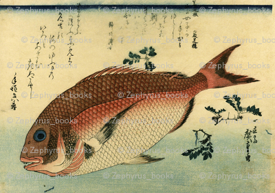Madai or Red Tai (Red Seabream) - Hiroshige's Colorful Japanese Fish Print