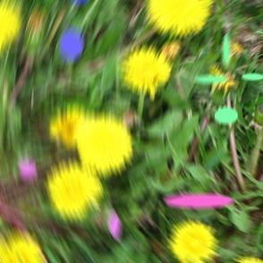 Dandelion_swirl