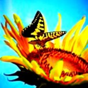 Rrrbutterfly_and_sunflower_ed_ed_ed_shop_thumb