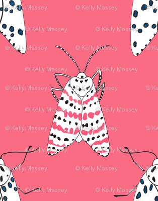 Rattlebox Moths in Pink