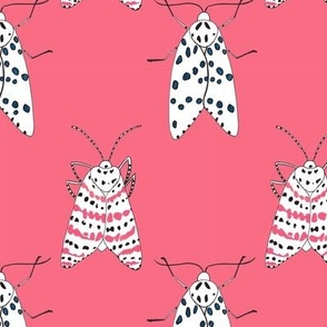 Rattlebox Moths in Pink