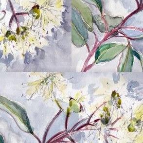 white eucalyptus