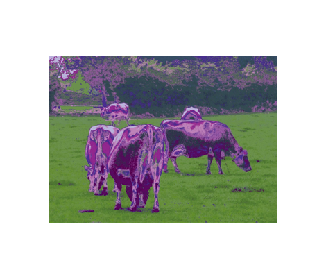 Purple Cows - pillow version