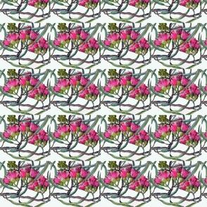 pink_eucalyptus