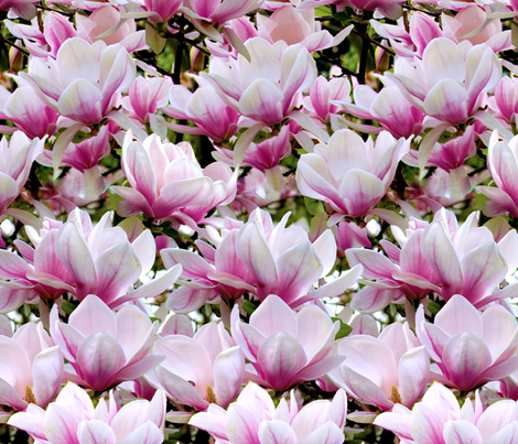 Huge Magnolias fabric by bonnie_phantasm on Spoonflower - custom fabric