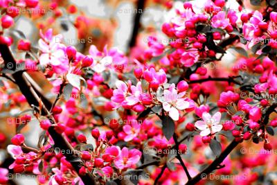 ManyBlossoms