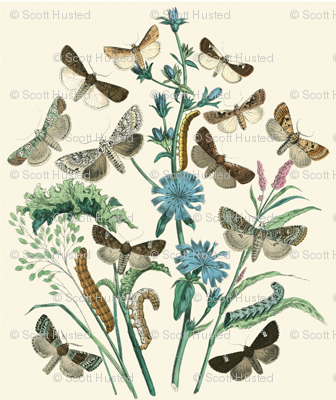 butterflies and wildflowers