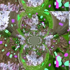 Lilac_bulge