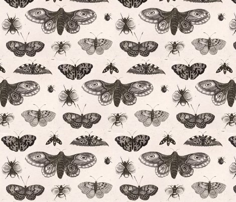 Rrrwenceslas_hollar_-_a_moth__butterflies__and_bees_shop_preview