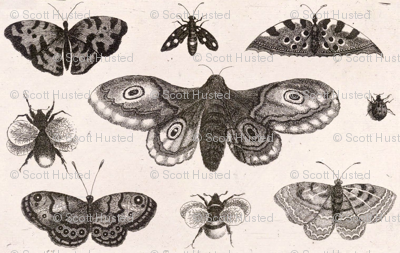 A Moth, Butterflies and Bees