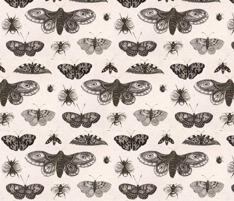 Rrrrwenceslas_hollar_-_a_moth__butterflies__and_bees_shop_preview