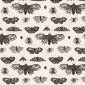 Rrrrwenceslas_hollar_-_a_moth__butterflies__and_bees_shop_thumb