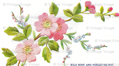 Wild Rose and Forget me not