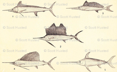 Swordfish and Sailfish