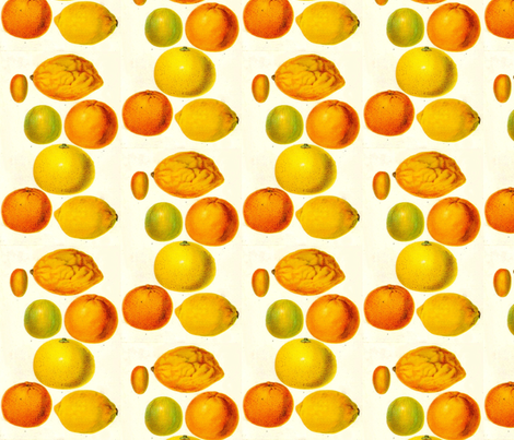 Citrus fabric by flyingfish on Spoonflower - custom fabric