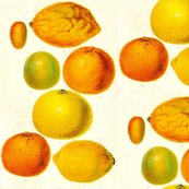 Rrbotanical-fruits-citrus-fruitsdetail_shop_thumb