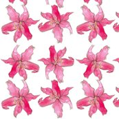 Rrpink_lily_shop_thumb