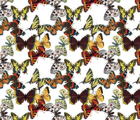 butterflys fabric by mysticalarts on Spoonflower - custom fabric