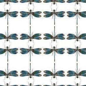 dragonfly_1e