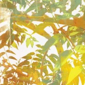 Idyllwild Canopy - painted