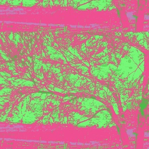 redbud_in_magenta with green background