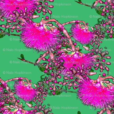 Otaheite blossom